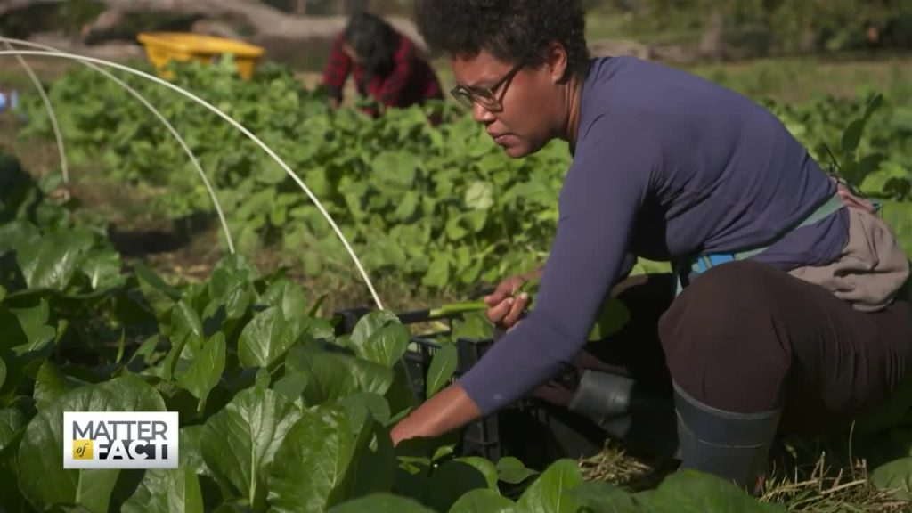 Seeds of Change: How urban farming is helping erase food deserts