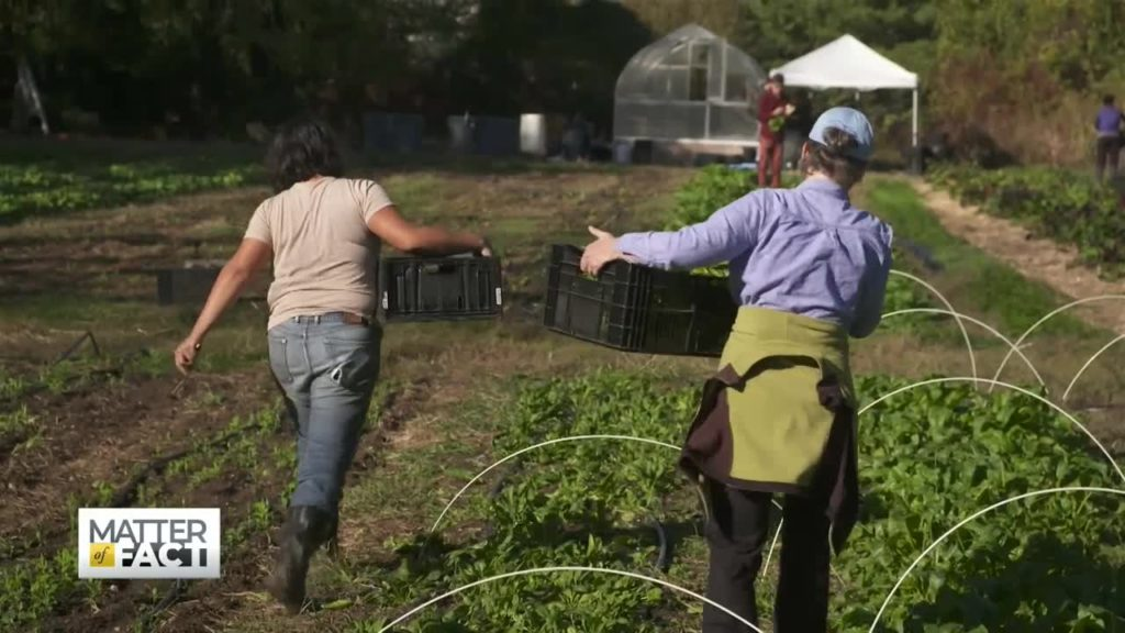 How Urban Farms Are Changing the Landscape of Food Deserts